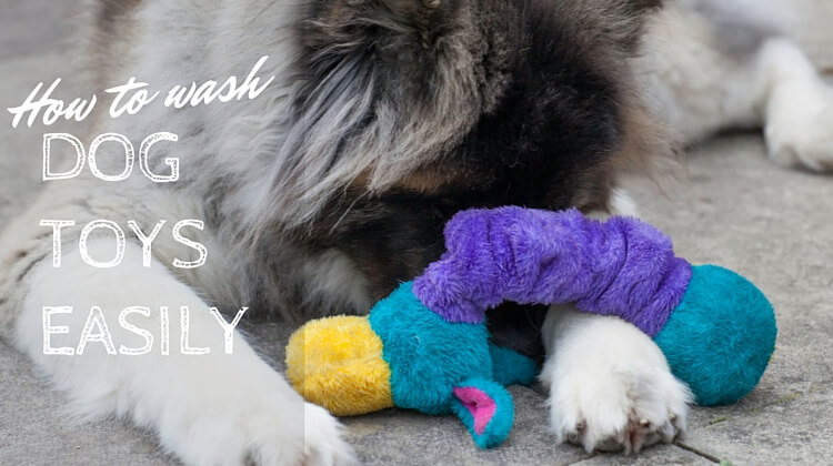 How to wash dog toys in the washing machine